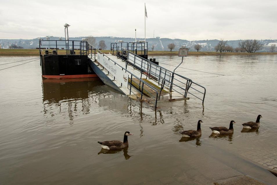 Das war ebenfalls an der Elbe-Dampferanlegestelle in Kötzschenbroda Anfang Februar. Damals bei einem Pegelstand von knapp unter fünf Metern.