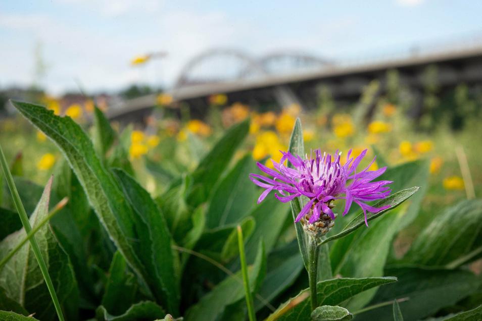 Um die Brücke grünt und blüht es. Seit Jahren wird geprüft, wie umweltverträglich sie ist.