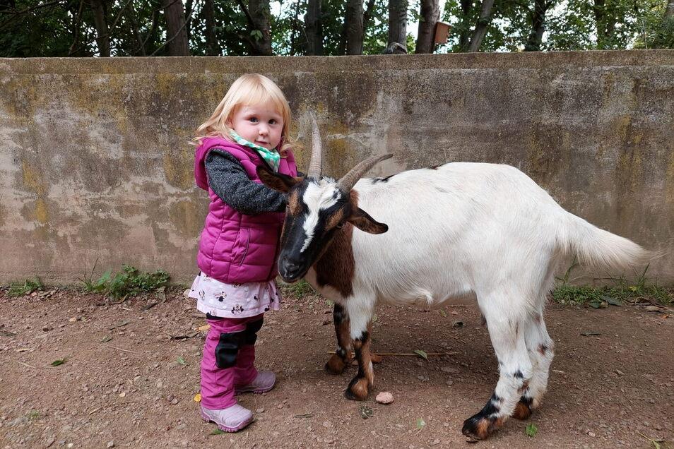 Maria aus Moritzburg hat sich mit einer Ziege im Meißner Tierpark angefreundet. Heiko Drechsler und Spender würde einige der Tiere gern an den Nachfolger auf dem Gelände übergeben, doch der winkt vieldeutig ab.