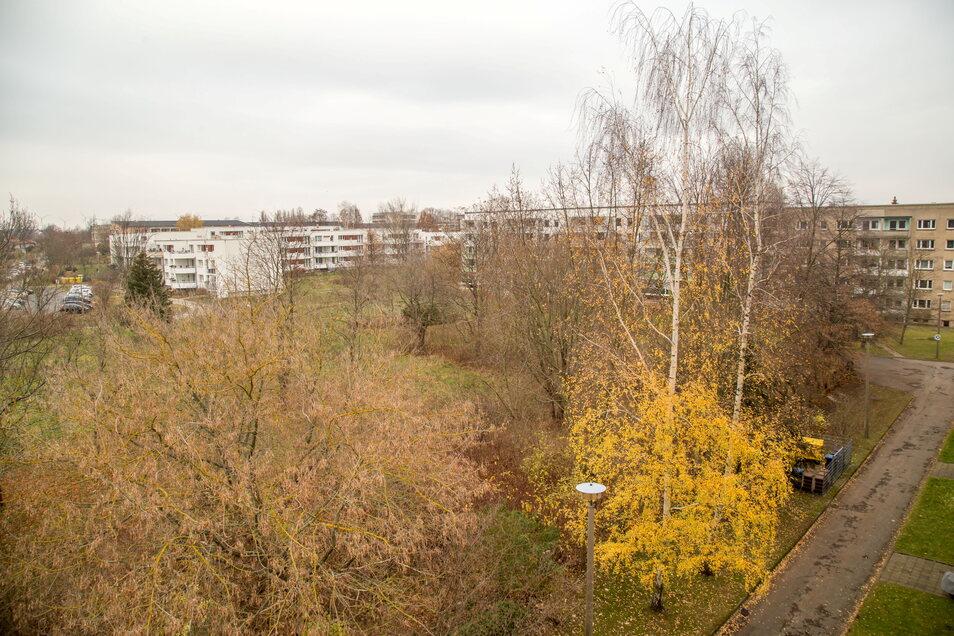 An vielen Stellen erobert die Natur auch von allein zurück, was beim Bau des neuen Stadtteils verloren ging - so auch auf dem Gelände der ehemaligen Kita am Nordring.