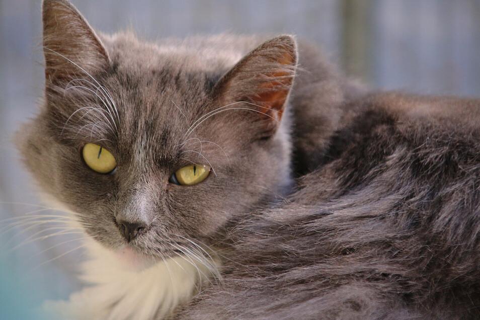 Eine Katze ist in Doberschau offenbar mit einem Luftgewehr beschossen worden.