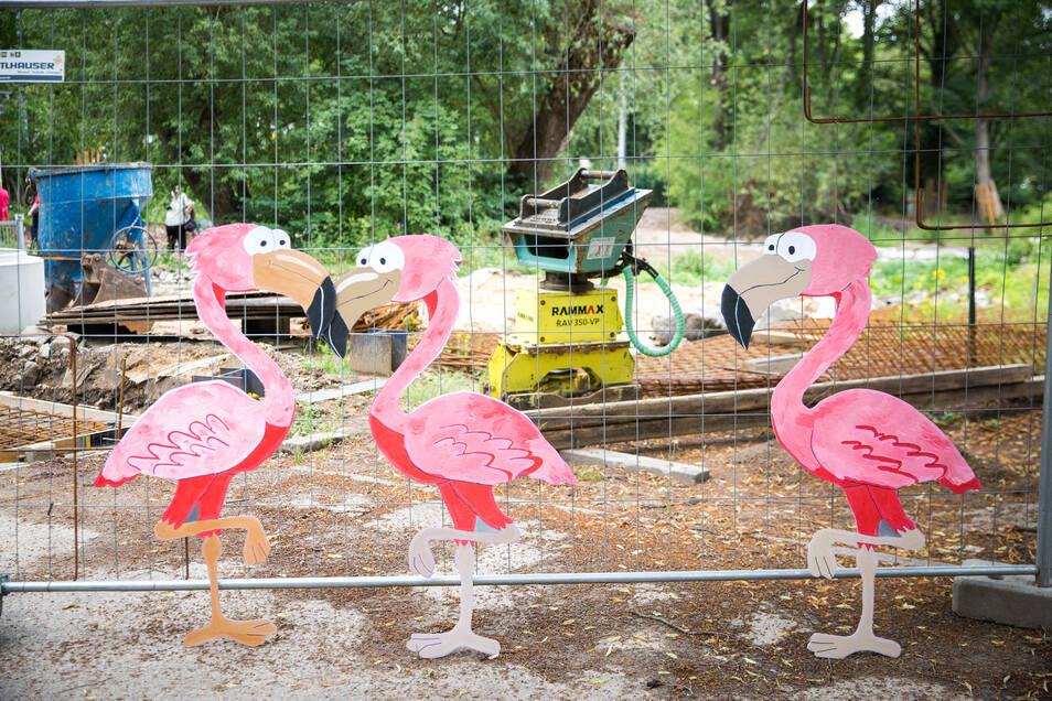 Die Bauarbeiten im Zoo laufen seit März und wurden durch die Corona-Krise nur kurz unterbrochen.
