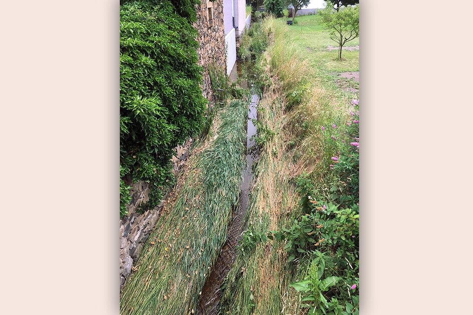 An dieser Stelle ist die Heidelache in Ebersbach fast zugewachsen. Das könnte bei Starkregen zur Hochwassergefahr werden.