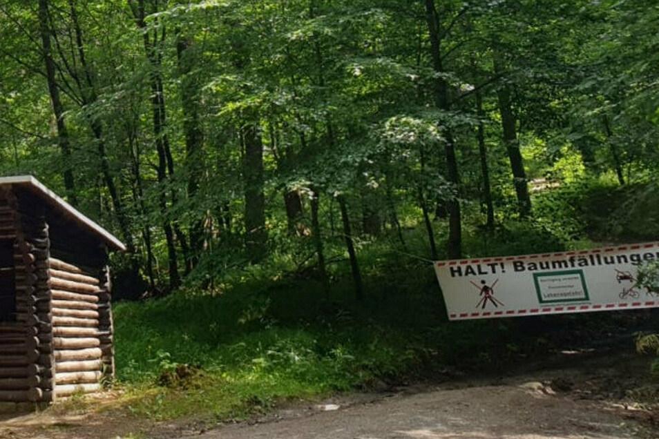 Wie hier im Sebnitzer Wald sind derzeit überall im Forstbezirk Neustadt Waldwege gesperrt. Grund sind Baumfällungen zur Borkenkäferbekämpfung.