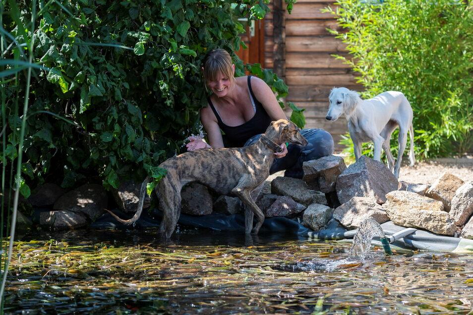 So ein Hund ist ja auch nur ein Mensch: In Jana Dawedeits Hundepension in Coswig erfrischen sich die Galgo-Espanol-Hündin Leni, während Jamila, ein Saluki, erst einmal nur zuschaut.