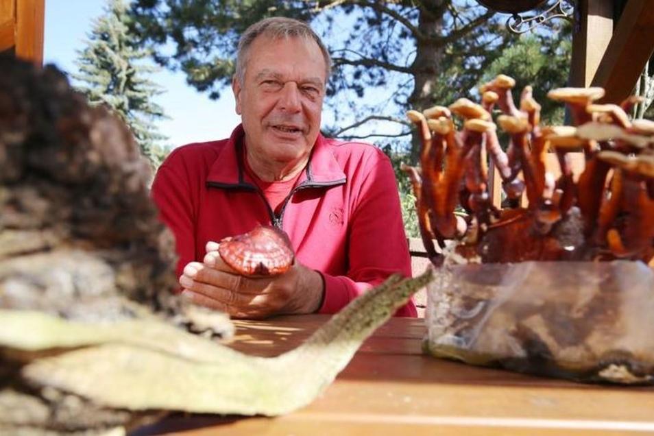 Dieses Jahr geht es nicht mit rechten Dingen zu, sagt Pilzberater Eckart Klett aus Liegau-Augustusbad. Zurzeit gibt es ungewöhnlich viele Pilze und es wachsen Exemplare, die nicht in diese Jahreszeit gehören.