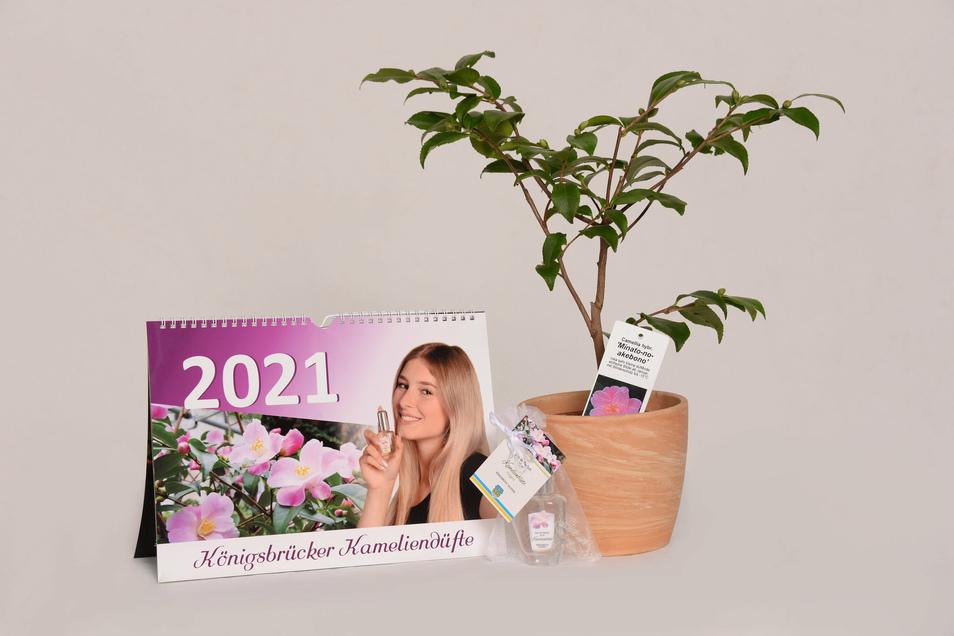 Kalender, Parfüm und Kamelienpflanze - das alles gehört zum duftenden Weihnachtsgeschenk.