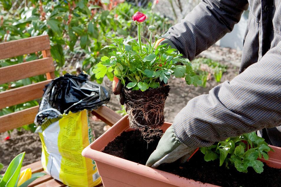 Einer Pflanze ist es relativ egal, wie das Gefäß beschaffen ist - ihre Wurzeln brauchen aber ausreichend Platz.