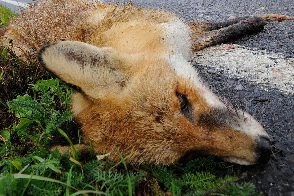 Dieser Fuchs ist an einer Straße verendet. Da kümmern sich Jäger und Straßenmeister. Anders sieht es auf Privatgrundstücken innerorts aus.
