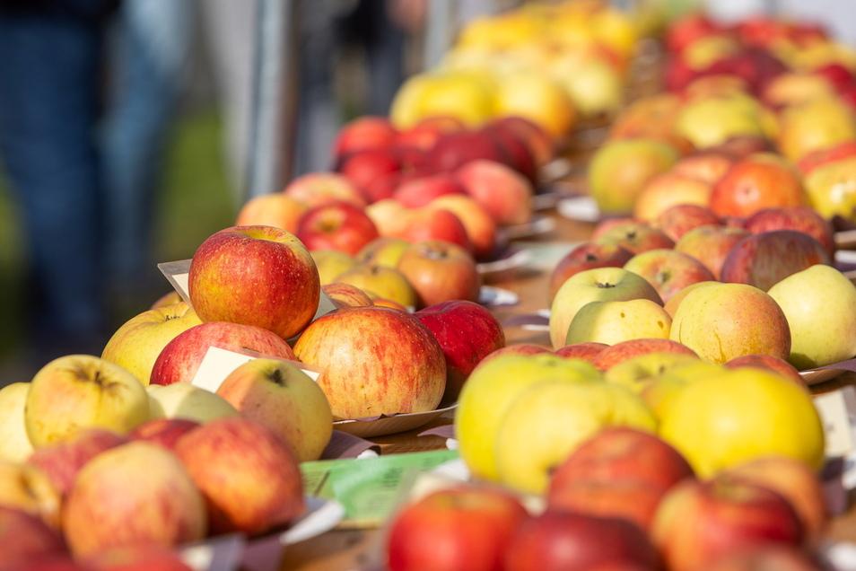 Hier haben die Apfelfachleute in Ulberndorf eine Ausstellung mit verschiedensten Apfelsorten und Informationen zu den Früchten aufgebaut.