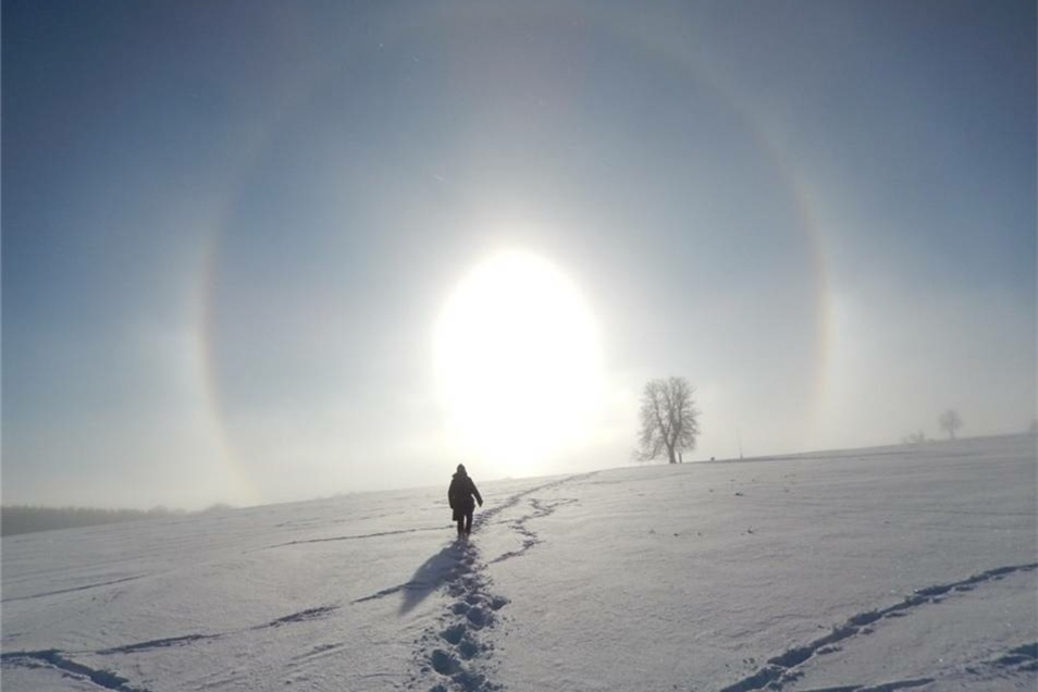 Einsam der Sonne entgegen. Christoph Schildbach aus Bad Gottleuba gelang dieser Schnappschuss auf der Oelsener Höhe.