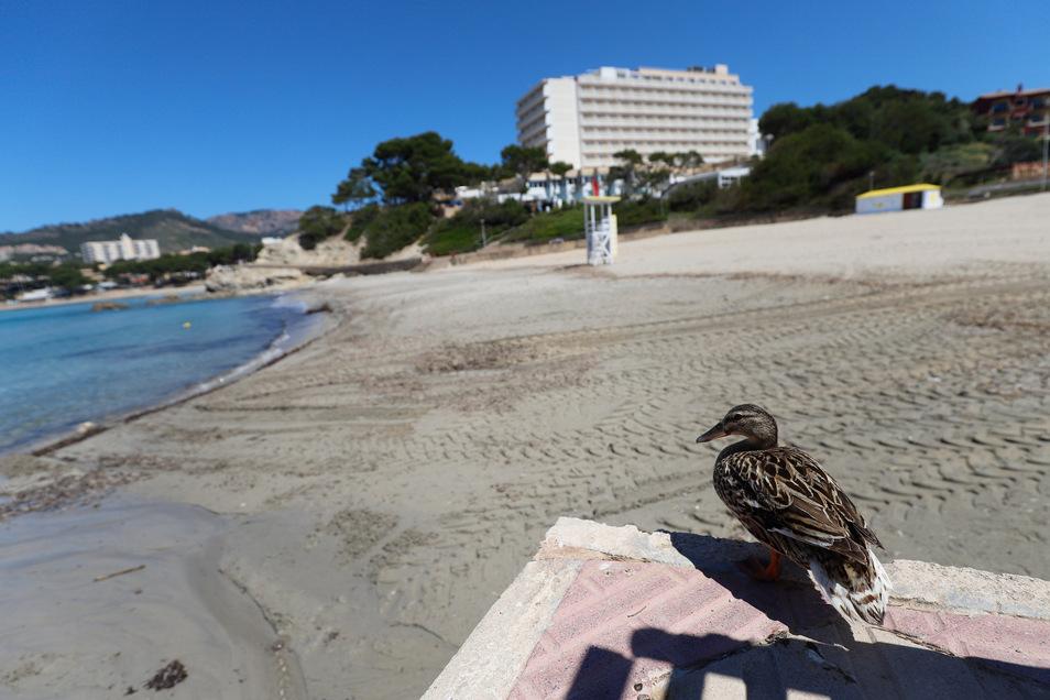 Nichts los in Spanien, wie hier am Strand von Paguera auf der Insel Mallorca.