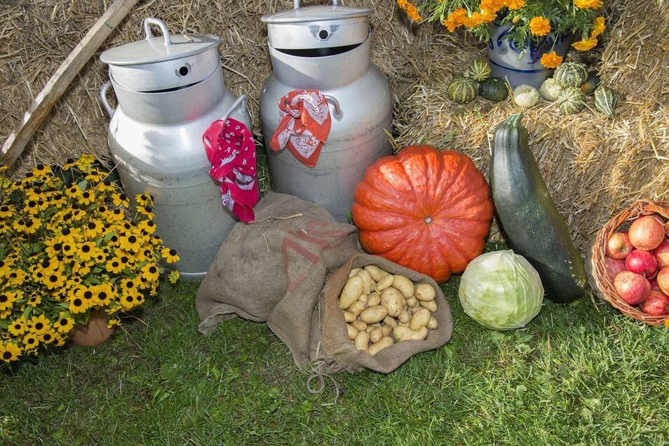 Der Herbst lockt mit Märkten und Erntedankfesten - voller Entdeckungen und Leckereien.