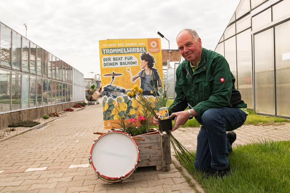 """Armin Rühle vom gleichnamigen Gartenbaubetrieb in Zabeltitz präsentiert die Pflanze des Jahres - den """"Trommelwirbel"""". Beim Tag der offenen Gärtnerei am Sonnabend konnte er sich über regen Kundenbesuch freuen."""