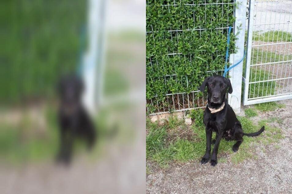 Unbekannte haben den Hund am Tor des Tierheims Bischdorf angeleint.