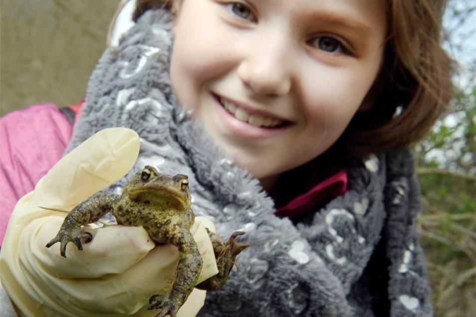 Amelie rettete eine Kröte, die in einen Schacht gefallen war.