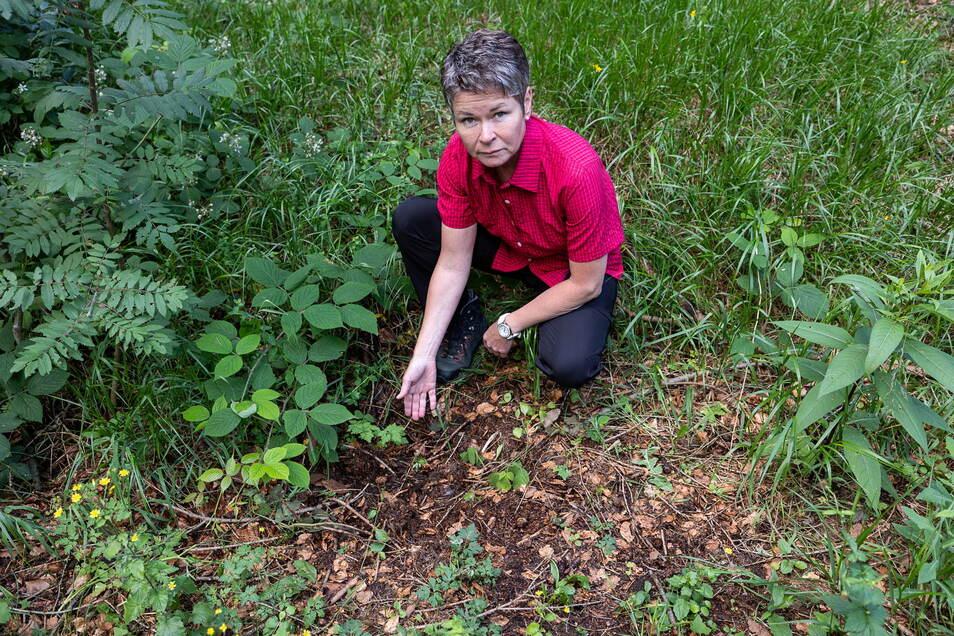 Kathrin Lehmann ist empört über das Verschwinden einer seit Jahren regelmäßig am Wegesrand im Hochwald bei Oberfrauendorf blühenden Türkenbundlilie, sie wurde offenbar ausgegraben.