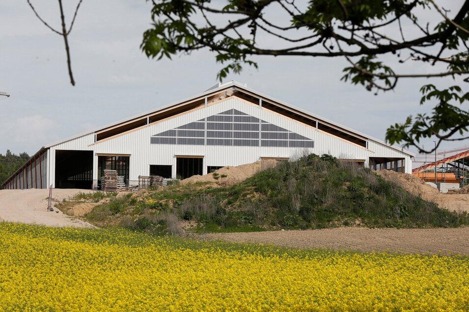 Der erste Teil des Herwigsdorfer Kuhstalles steht bereits. Fertig ist bislang aber nur die Außenhülle, der Innenausbau mit Melkrobotern & Co. kommt noch.