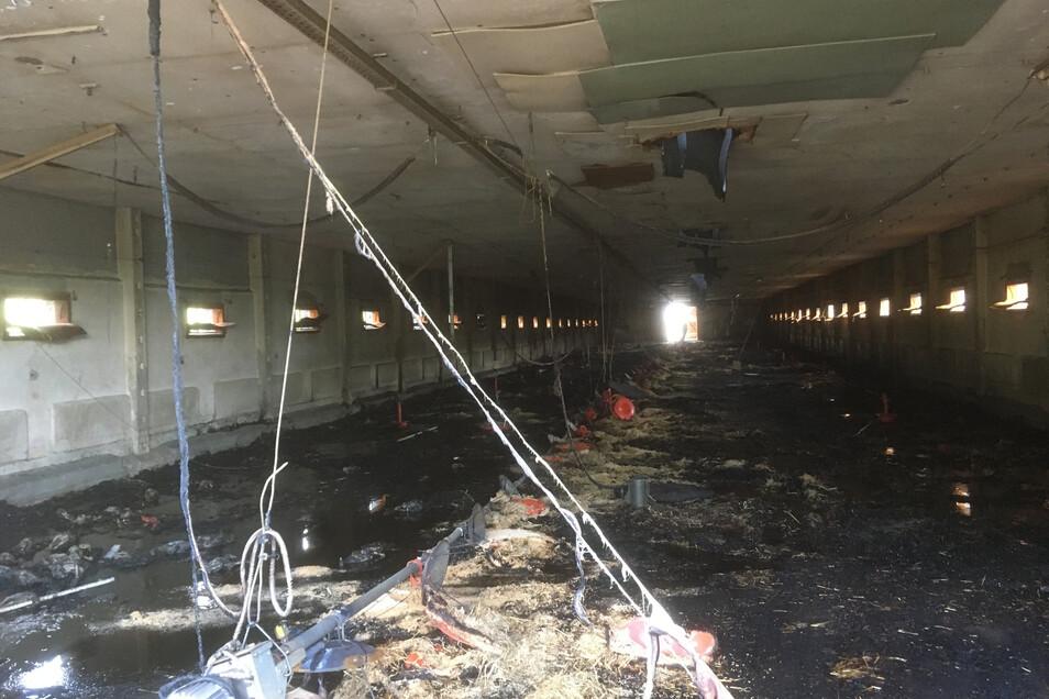 Im hinteren Teil wütete das Feuer im Stroh und vernichtete Anlagenteile.