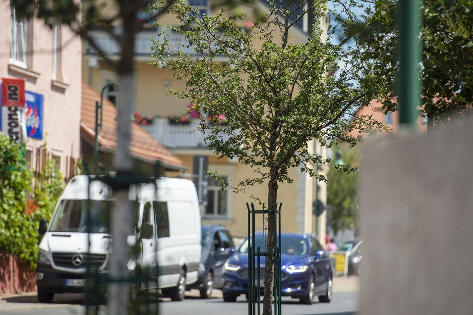 Auch wenn es ab und an regnet - Jungbäume, wie die auf der Hauptstraße, müssen gewässert werden, sollen sie unbeschadet durch den Sommer kommen.