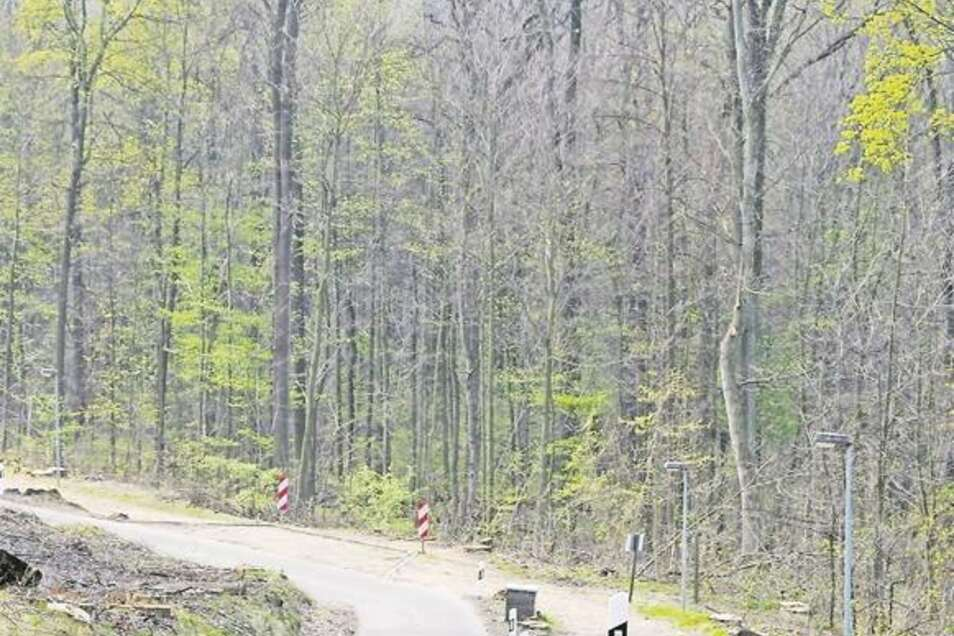 Vorher– nachher: Die alten Bäume spendeten Schatten und sorgten für eine ganz besondere Atmosphäre an der Auffahrt zum Honigbrunnen auf dem Löbauer Berg. Jetzt zeigt sich dort eine breite Schneise. Das stößt vielen Löbauern immer noch auf. Fotos: privat/M