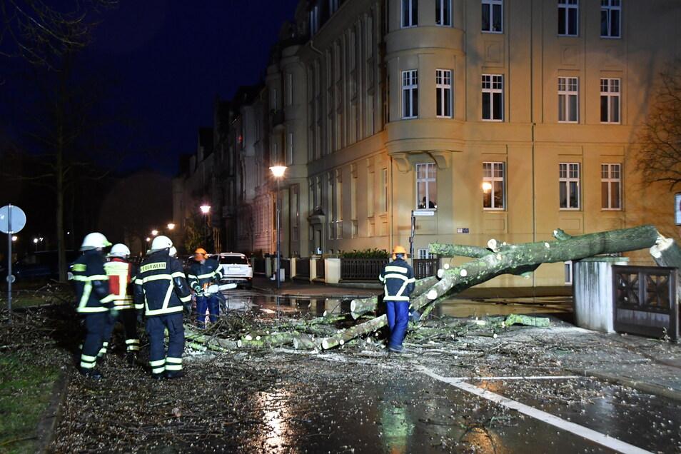 Auf der Goethestraße in Görlitz stürzte ein Baum um, die Feuerwehr musste ausrücken.