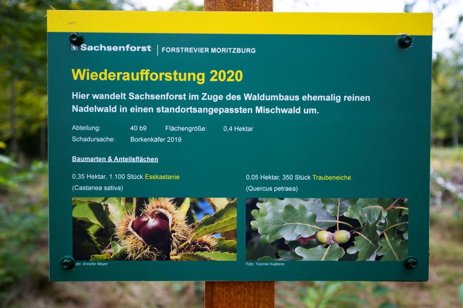 Borkenkäfer haben für Kahlschlag gesorgt, Förster sorgen für Neuanpflanzungen. Am Hellhaus in Moritzburg weist dieses Schild darauf hin.