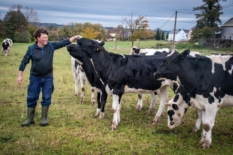 Gegenüber der Milchzapfstelle stehen einige Kühe auf der Wiese ein Erlebnis nicht nur für Kinder.