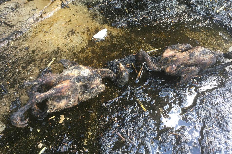 Die etwa vier Wochen alten Tiere wurden bei lebendigem Leib gebraten.