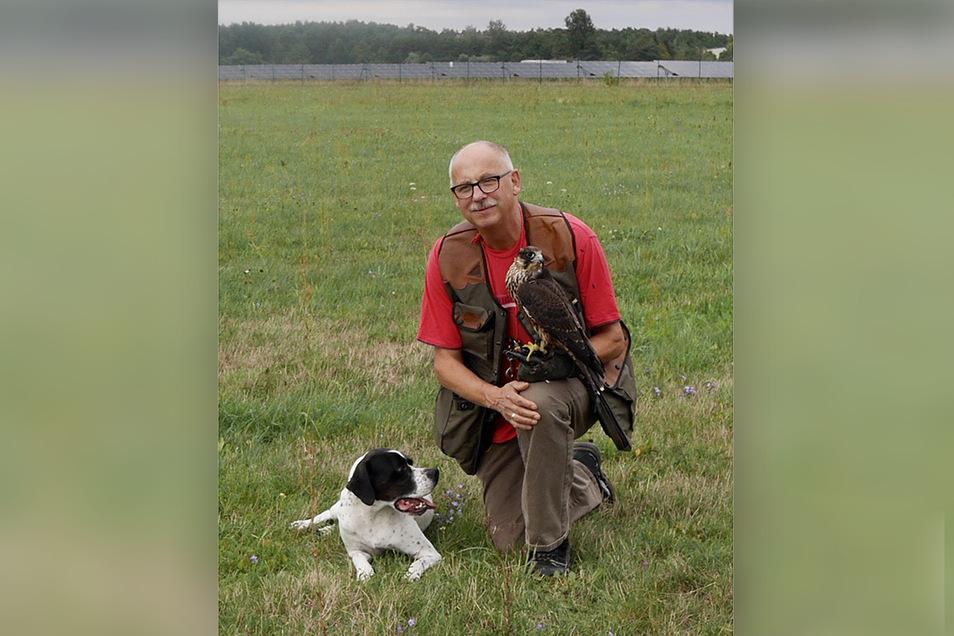 Der Rothenburger Falkner und Drogist Rudolf Garack mit seinem Jungfalken Ella und seinem Hund Aiti auf dem Flugplatz Rothenburg.