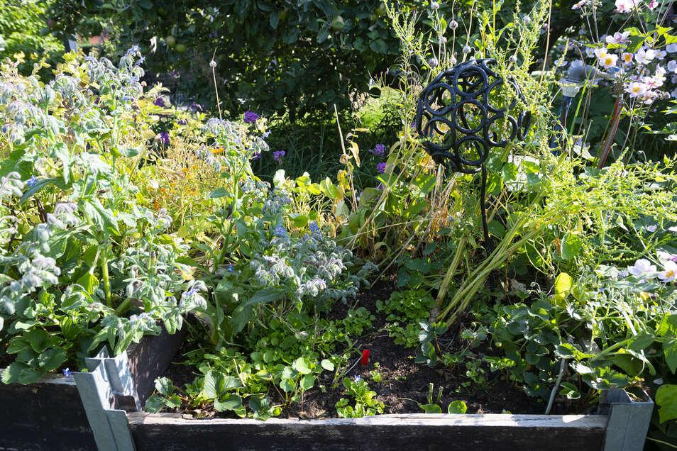 """Koniferen-Hecken gibt es bei Birgit Kempe nicht, so wenig wie Beete mit Gemüse in Reih und Glied. Dafür aber viele Hochbeete unterschiedlicher Höhe, die von beiden Seiten gut zugänglich sind. """"Das ist gut für meinen Rücken, aber auch die Pflanzen wachsen"""