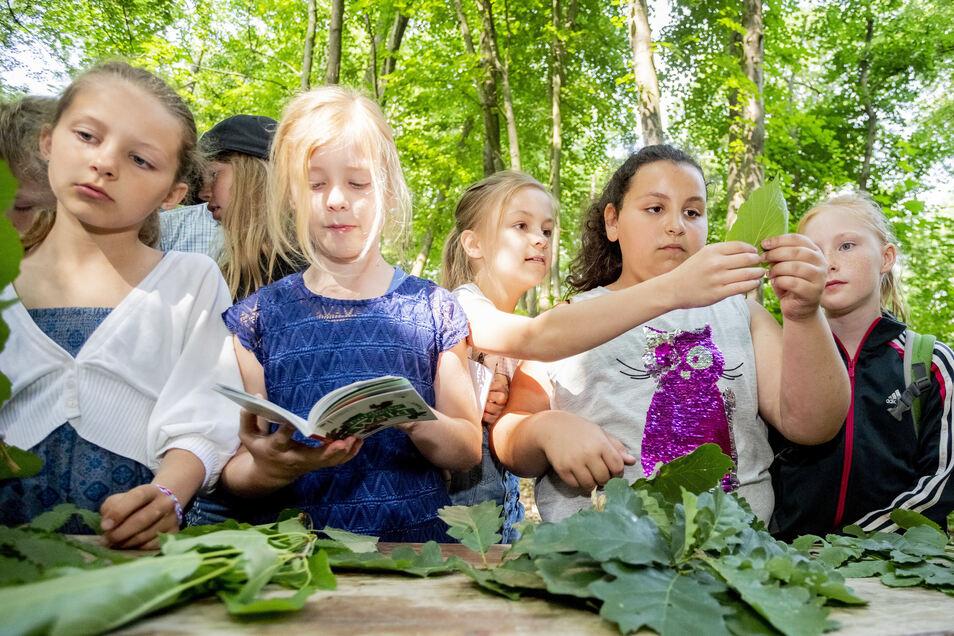 Eine Kita des ASB verfolgt in Dresden erfolgreich ein besonderes Projekt. Die Kinder sind– wie diese Schüler bei den Thüringer Waldjugendspielen – draußen zu Hause. Das führt nun aber zu Konflikten.