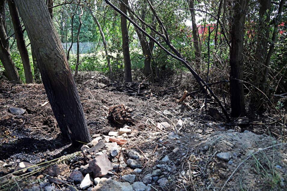 An den Bäumen sind noch Spuren des Feuers zu erkennen. Die Polizei geht von Brandstiftung aus.