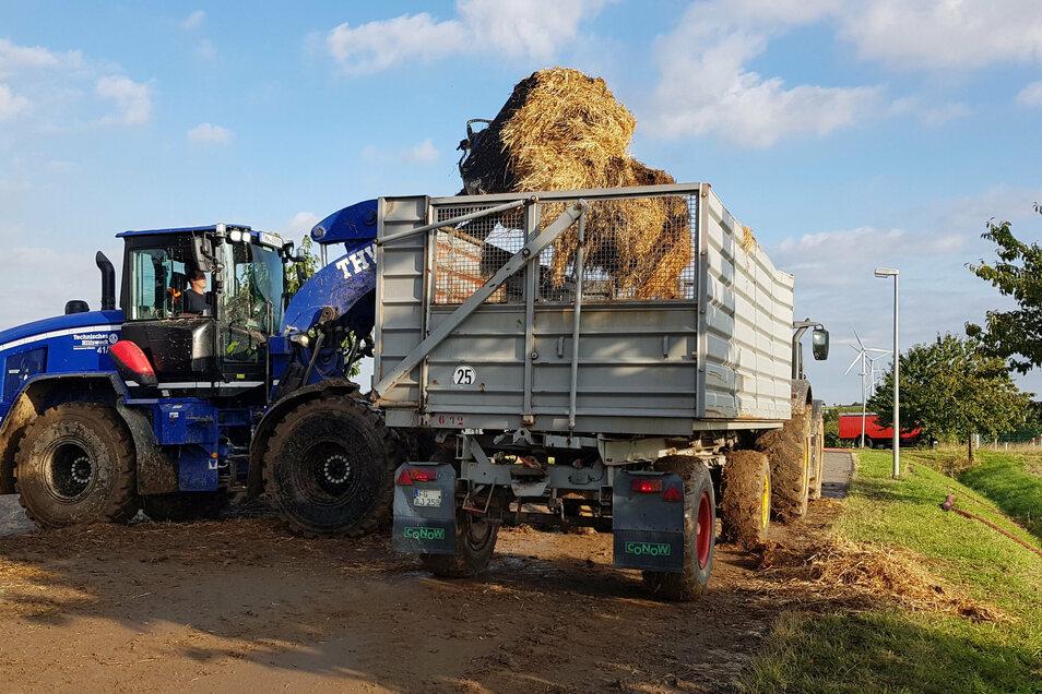 Zwei Radlader des THW sind in Berbersdorf. Sie schichten das Stroh um und verladen es auf Traktoranhänger. Diese fahren das Stroh auf das benachbarte Feld.