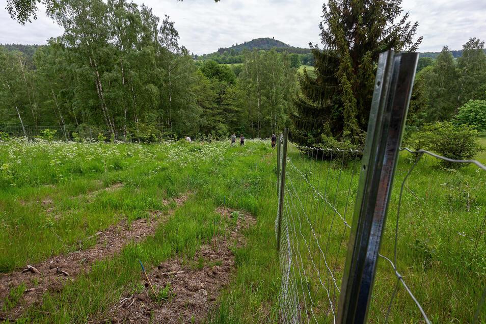 Die Wiese mit dem angepflanzten Gehölzen befindet sich in Sichtweite des Geisingbergs und unweit der Ortschaft Hirschsprung.