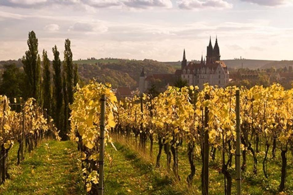 Mit Blick auf den Burgberg entstehen in Meißen besonders hochwertige Weine. Oppacher Mineralwasser bringt ihren ausgezeichneten Geschmack perfekt zur Geltung.
