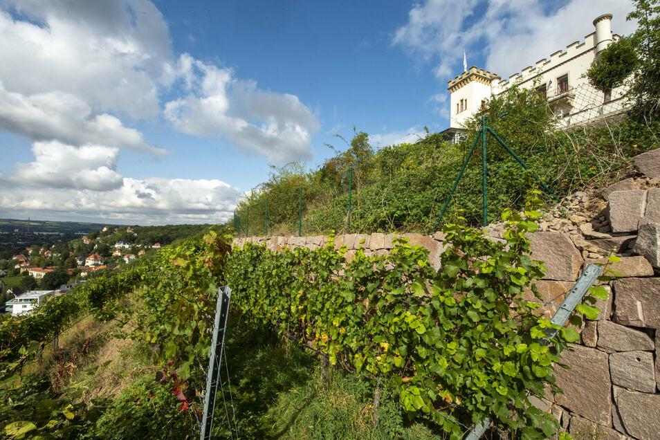 Der Besitzer der Friedensburg in Radebeul soll sein Wohnrecht nun auch per Bebauungsplan sowie im Flächennutzungsplan gesichert bekommen.