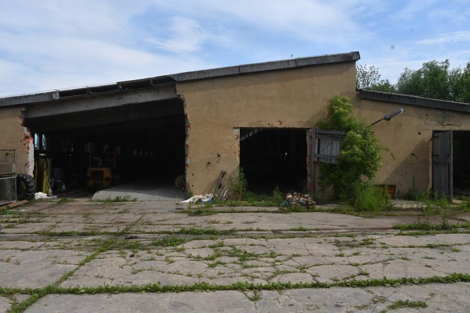 Die alte Milchviehanlage im Neustädter Ortsteil Berthelsdorf wird ab dem Sommer zur Grünfläche.