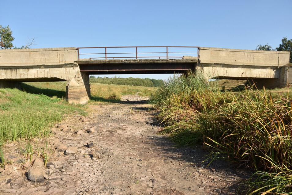 Die alte Brücke bei Neuwiese hat ihre besten Tage lange hinter sich. Jetzt kann man sie sich mal trockenen Fußes von unten betrachten.