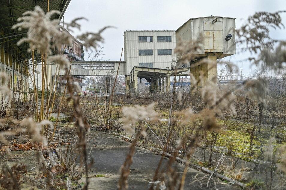 Blick auf das Muskatorgelände in Riesa. Der Stadtrat befasst sich demnächst erneut mit der Industriebrache.