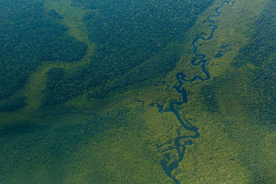 Der Wald im Amazonasgebiet in Brasilien gehört zu den wenigen verbliebenen intakten Lebensräumen der Welt.
