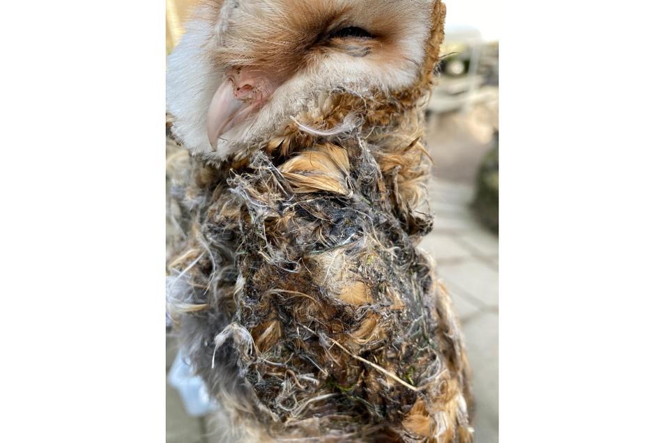 Die Federn des Tieres mussten aufwändig gereinigt werden. Die Eule wird aber überleben und soll - wieder aufgepäppelt - frei gelassen werden.