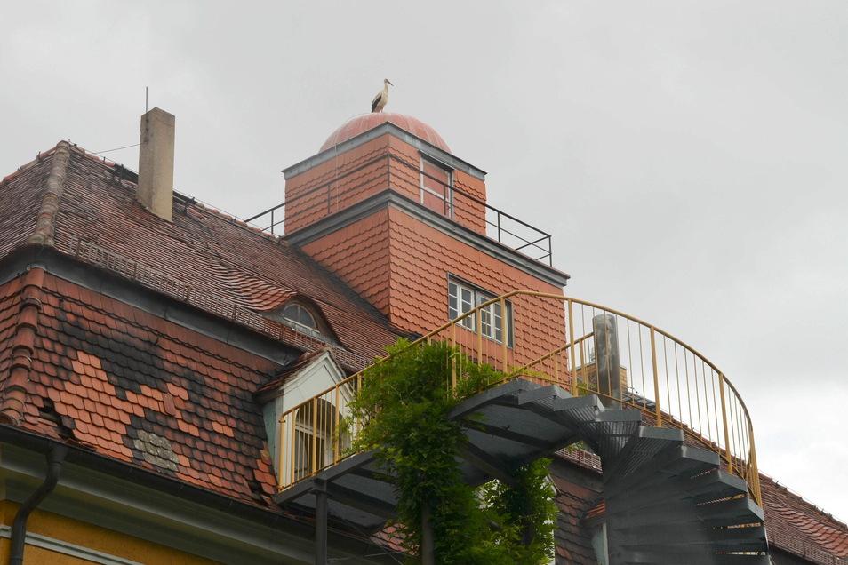 Der Storch kommt auf die Kuppel der ehemaligen Sternwarte täglich zu Besuch.