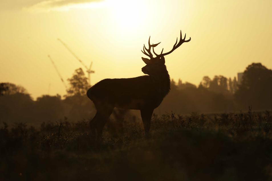 In den heimischen Wäldern finden wieder Drückjagden statt. Das Wild wird auch vor Ort vermarktet.