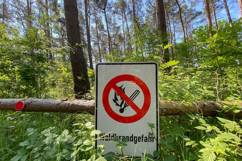 Die Trockenheit macht Sachsens Wäldern zu schaffen.