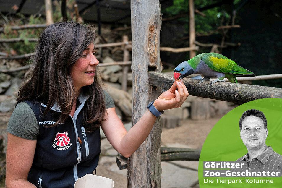 Na, magst Du noch? Zoopädagogin Isa Plath füttert einen Chinasittich.