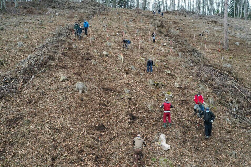 Was in Gottleuba schon gemacht wird, machen die Grünen jetzt in einer Aktion auch im Hellendorfer Wald: Bäume pflanzen.