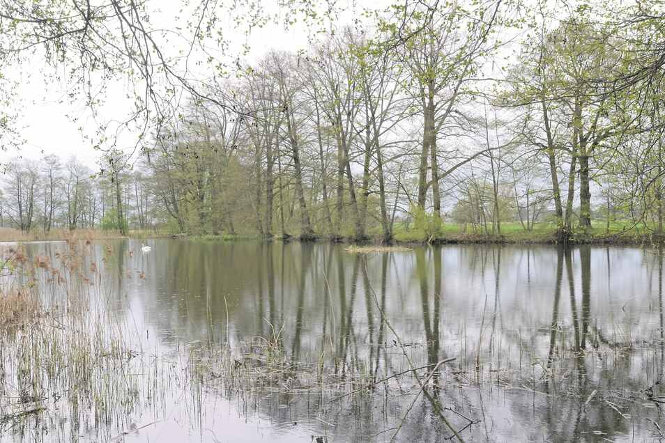 Rund um den Dienstwiesenteich am Erlichthof Rietschen soll künftig der Fischerei-Lehrpfad führen. Von den neun Stationen sollen hier drei eingerichtet werden.