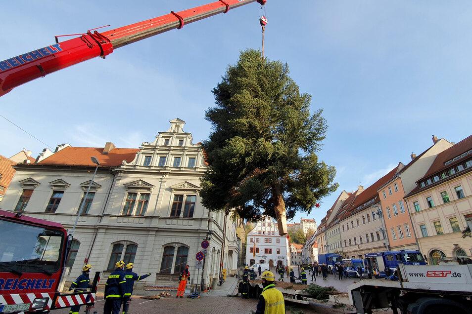 Eingeschwebt: Mit dem Kran wird der Weihnachtsbaum am Pirnaer Rathaus aufgestellt.