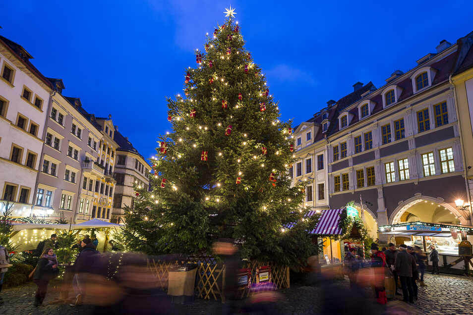 Der Görlitzer Weihnachtsbaum auf dem Untermarkt gehört immer zu den schönsten in Sachsen.